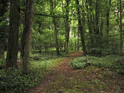 Woodland Walks in Brokenheugh Lodge Estate